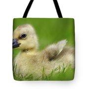 Greylag Goose Gosling Tote Bag