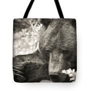 Grizzly At Rest Tote Bag