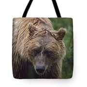 Grizzly Bear Ursus Arctos, Denali Tote Bag