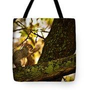 Grooming Grey Squirrel Tote Bag
