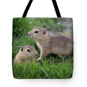 Ground Squirrels, Oak Hammock Marsh Tote Bag