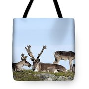 Group Of Caribou Resting On Alpine Tote Bag