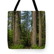 Group Of Redwoods Tote Bag