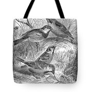 Group Of Sparrows Tote Bag