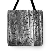 Grove Of Birch Trees Tote Bag