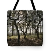 Grove Of Trees In The Ocala National Tote Bag