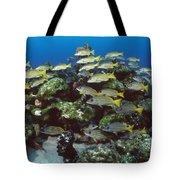 Grunt School Along Coral Reef Cocos Tote Bag by Flip Nicklin