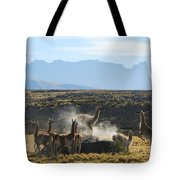 Guanacos In Action Tote Bag by Camilla Brattemark