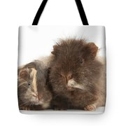 Guinea Pig And Baby Tote Bag