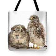 Guinea Pig And Kestrel Chick Tote Bag