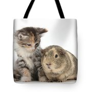 Guinea Pig And Maine Coon-cross Kitten Tote Bag