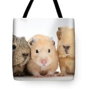 Guinea Pigs And Hamster Tote Bag