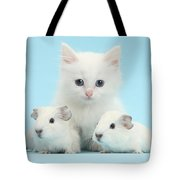 Guinea Pigs And Maine Coon-cross Kitten Tote Bag