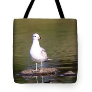 Gull - Don't Get Wet Feet Tote Bag