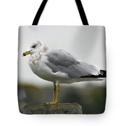 Gullwatch Tote Bag
