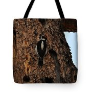 Hairy Woodpecker On Pine Tree Tote Bag