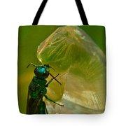 Halicid Bee 17 Tote Bag