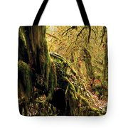 Hall Of Mosses Tote Bag