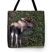 Handsome Fellow Tote Bag