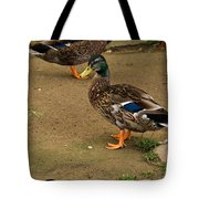 Handsome Mallard Tote Bag