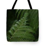 Hapuu Pulu Hawaiian Tree Fern - Cibotium Splendens Tote Bag