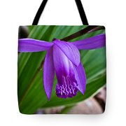Hardy Orchid 1 Tote Bag