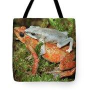 Harlequin Frog Atelopus Varius Pair Tote Bag