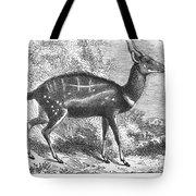 Harnessed Antelope Tote Bag