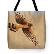 Harrier Over Golden Grass Tote Bag by William Jobes