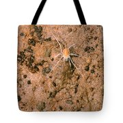 Harvestman Crosbyella Sp. In Cave Tote Bag