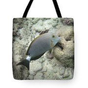 Hawaiian Tropical Fish P1060093 Tote Bag