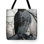 Hawk 7 Tote Bag