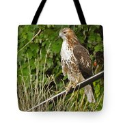 Hawk At A Wedding Tote Bag