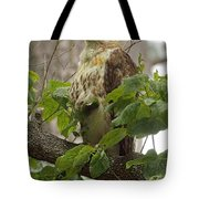 Hawk On Watch Tote Bag