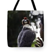 Hawk With Eyes Covered At A Show Inside The Jurong Bird Park In  Tote Bag