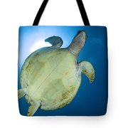 Hawksbill Sea Turtle Belly, Australia Tote Bag