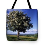 Hawthorn Tree On A Landscape, Ireland Tote Bag