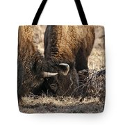 Head Butting Bison Tote Bag