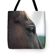 Head Of A Wild Horse In The Wilderness Tote Bag