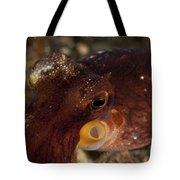 Head Shot Of A Brownish Red Coconut Tote Bag