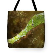 Headshot Of A Green Helimeda Ghost Tote Bag