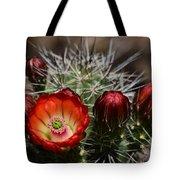 Hedgehog Cactus Flowers  Tote Bag