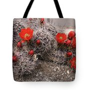 Hedgehog Cactus With Red Blossoms Tote Bag