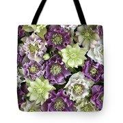 Hellebore Helleborus Sp Flowers Tote Bag