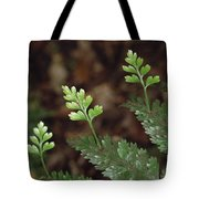 Hen And Chicken Fern Asplenium Tote Bag