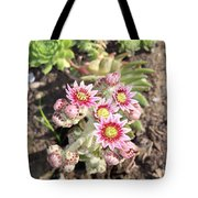 Hens And Chicks Flowers Tote Bag