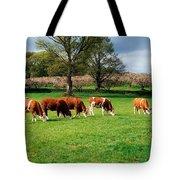 Hereford Bullocks Tote Bag