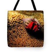 Hermit Crab On Coral Tote Bag