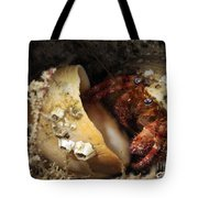 Hermit Crab Tucked Away Tote Bag