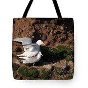 Herring Gulls Mating Tote Bag